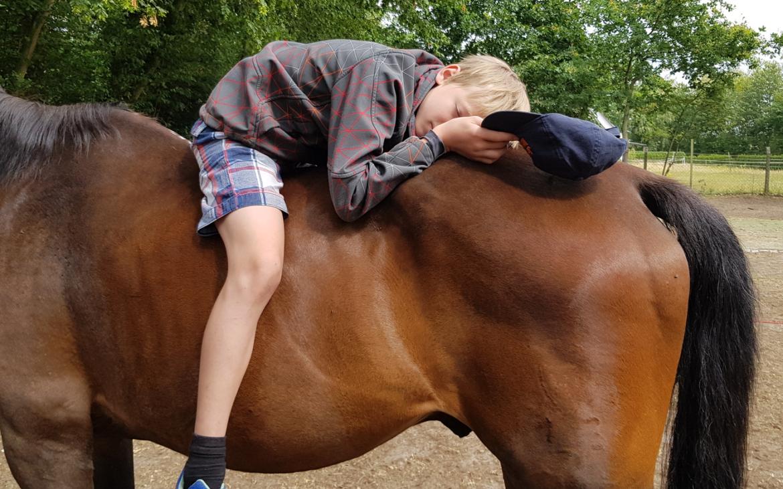 Pferdegestütztes Training 2019 wieder ein voller Erfolg