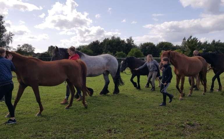 Pferdegestütztes Training 2021 geht nach Nordhessen